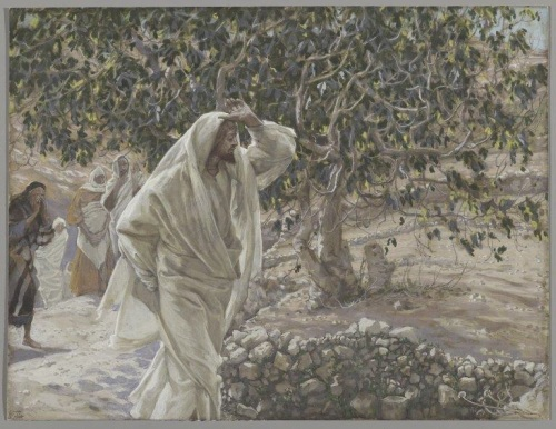 jesus e a figueira